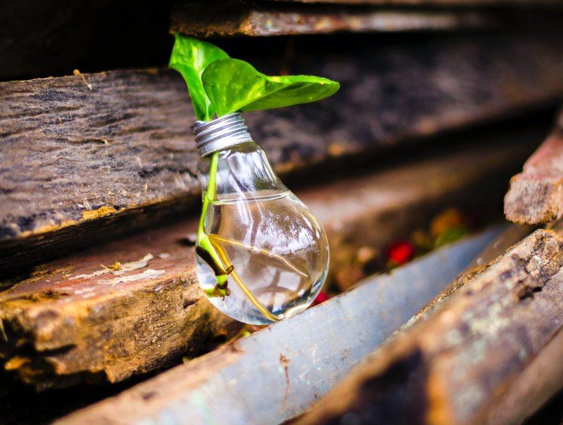 Headerbild für Nachhaltigkeit